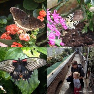 Butterfly House at Blenheim Palace, Oxfordshire