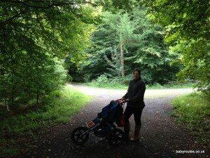 Stockhill Wood, Wells