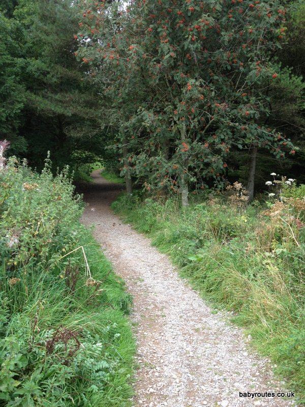 Stockhill Wood Pushchair Walk