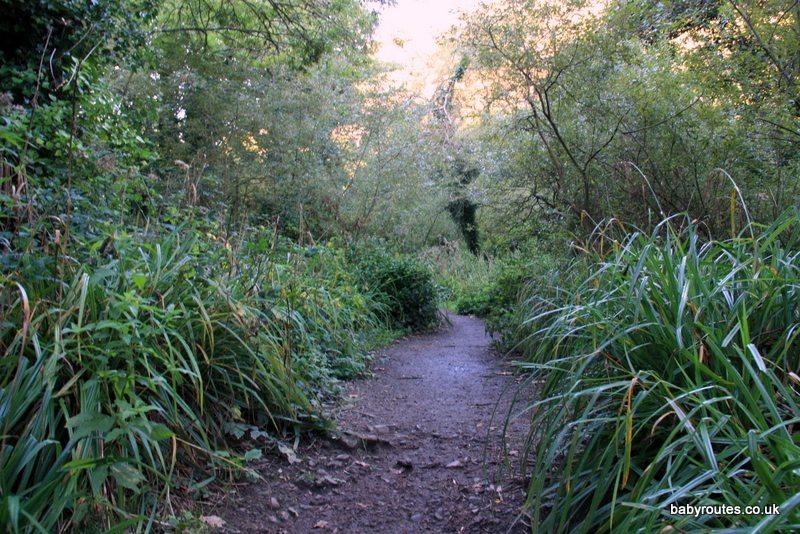 St Catherines Wood