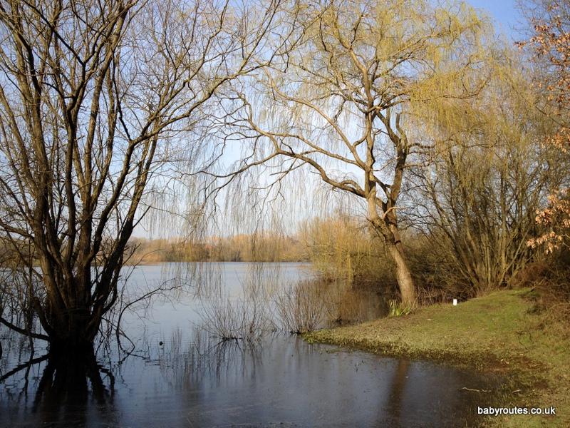 Loddon Nature Reserve Walk, Twyford