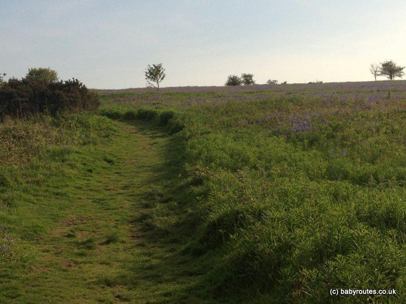 Felton Common Walk