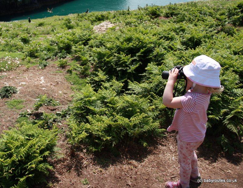 Puffin spotting on Skomer Island, Pembrokeshire, Wales