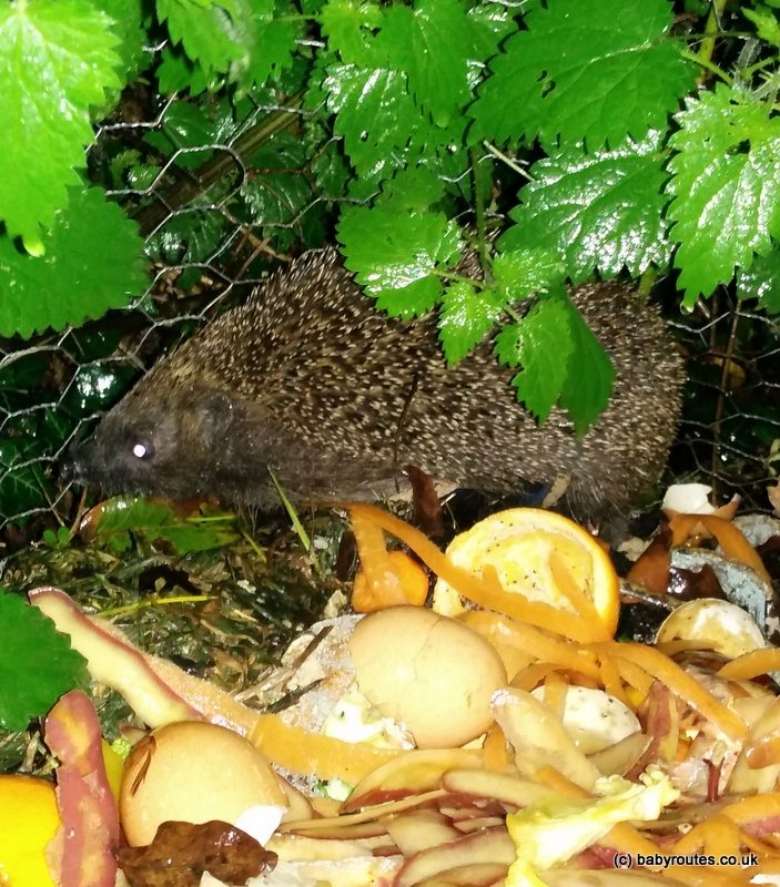 garden hedgehog house building, Baby Routes