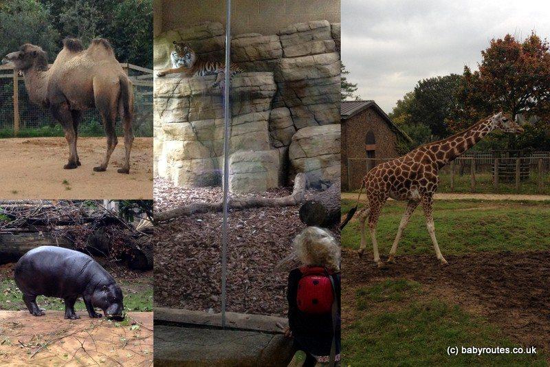 London Zoo, Regents Park, Baby Routes, London