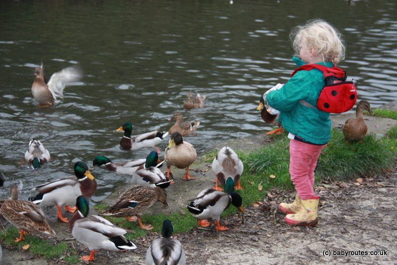 Feeding the ducks at Cromford Canal