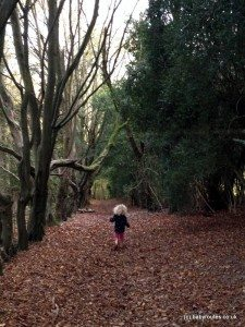 Autumn woodland walk