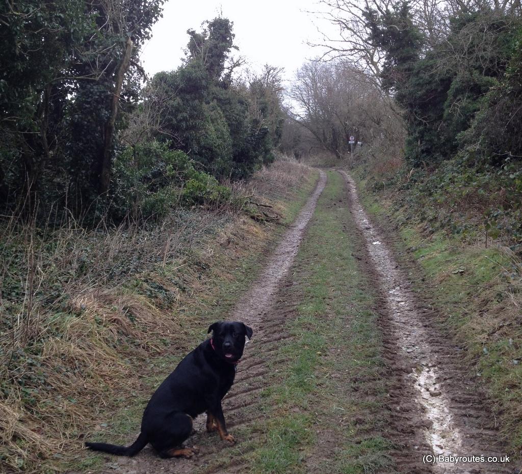 Ogbourne St. George Ridgeway Circular Walk, Baby Routes