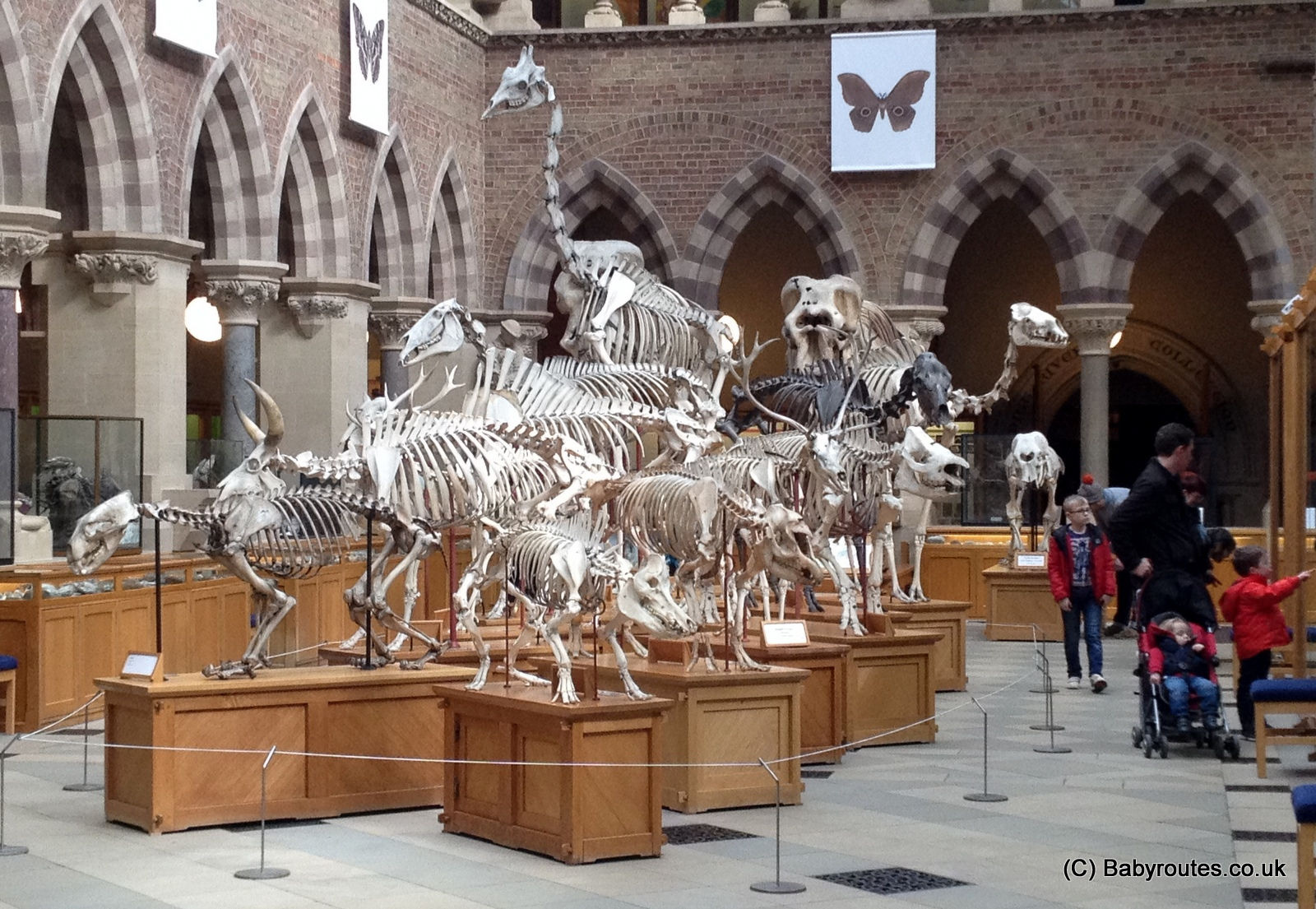 Oxford University Museum of Natural History, Baby Routes Review