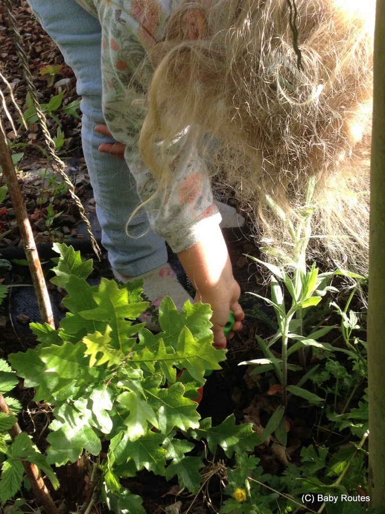 #30dayswild learning about roots