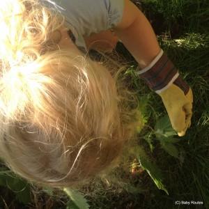 #30dayswild, nettles