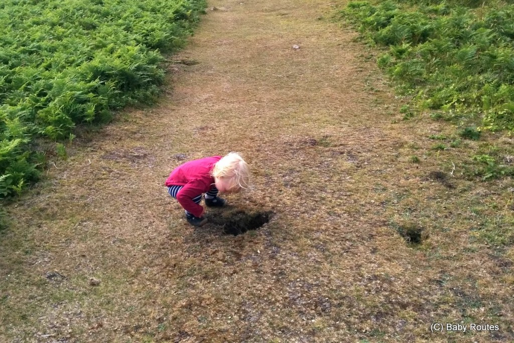 Looking for black rabbits, Isles of Scilly Wildlife