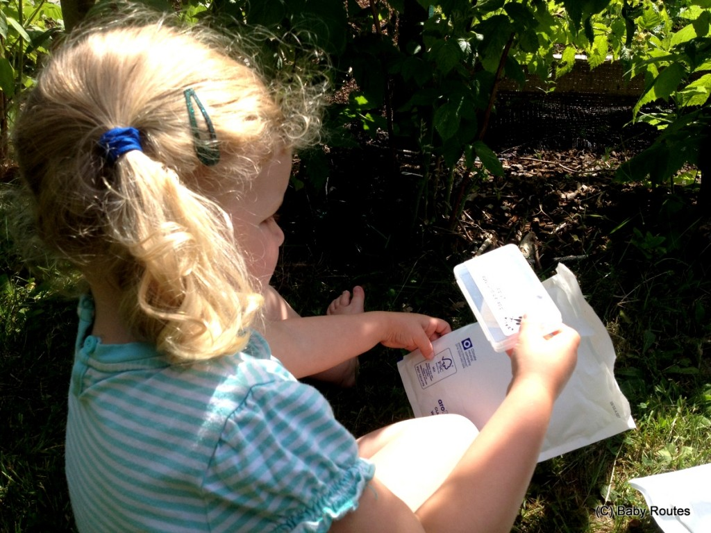 Opening the bug parcel. Green gardening with ladybirds and lacewing