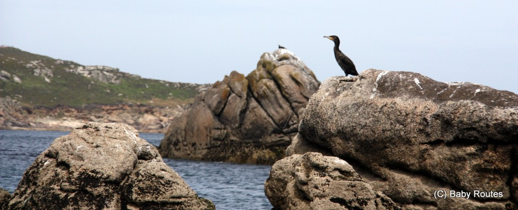 Isles of Scilly Wildlife. and Travel with Children