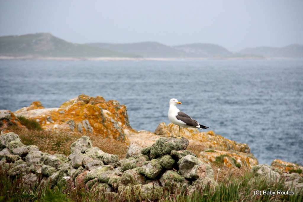 Isles of Scilly Wildlife