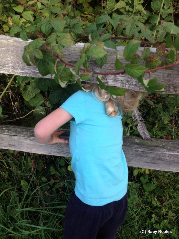 Roo blackberry picking
