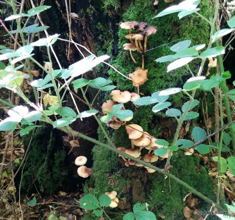 Wildlife Wednesday: Fungi and toadstools,