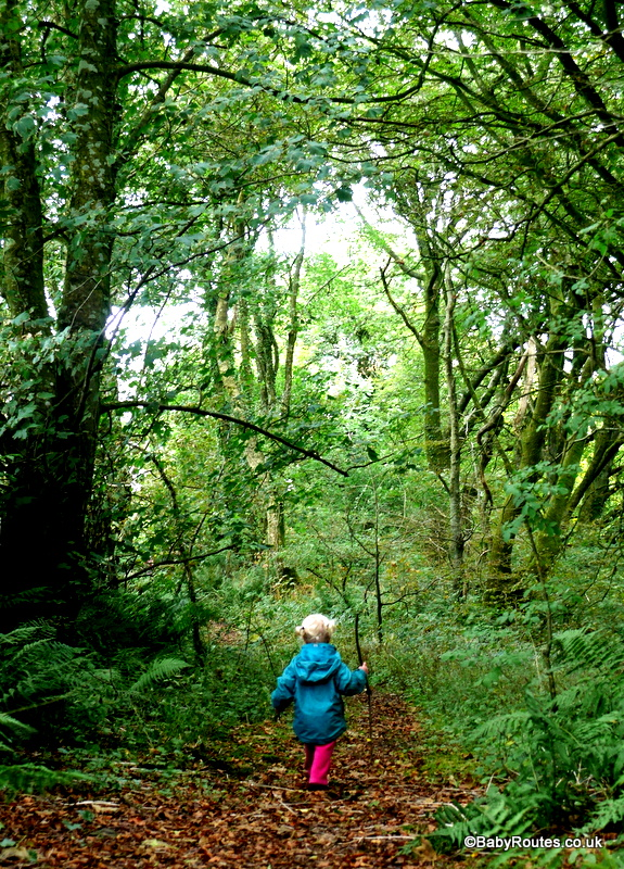 Sealyham Woods, Wolfs Castle, Pembrokeshire
