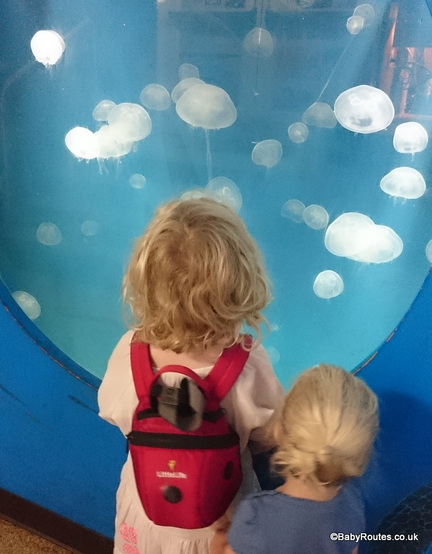 8 Fun Things to do with young children in Santa Monica