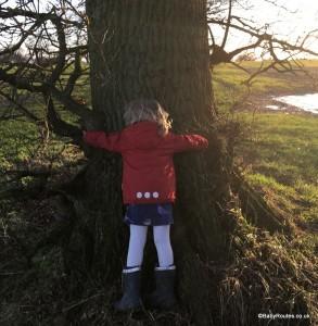Hug an oak! Winter Tree ID Activity