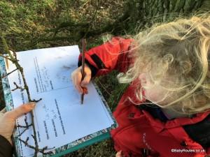 Winter Tree Identification Activity