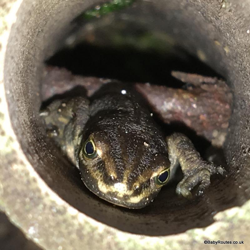 newt in bamboo edging