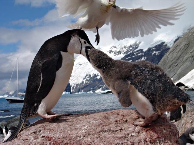antarctica-wildlife-1365738-640x480 cruising with children