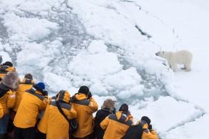 Polar bear spotting with Quark
