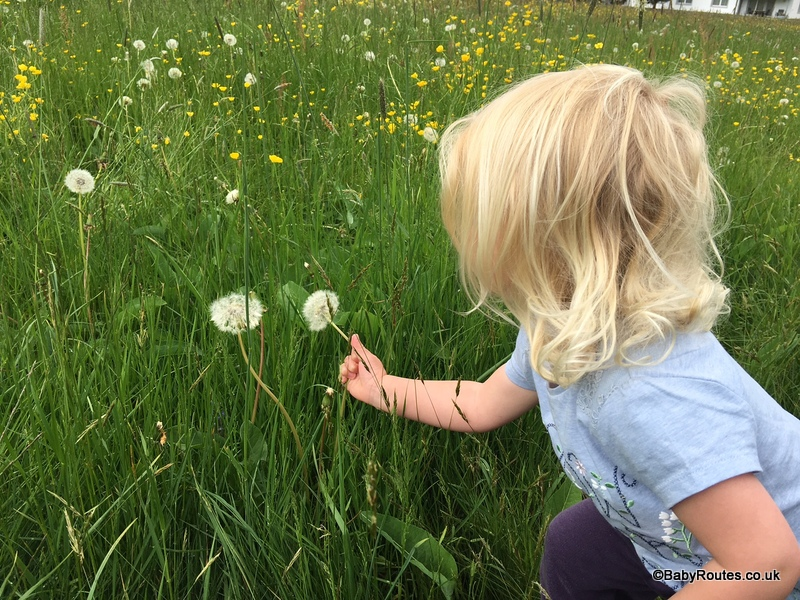 30 Days Wild, dandelions, making a nature mobile