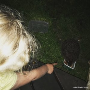 Nocturnal walk, hedgehog feeding, 30 Days Wild