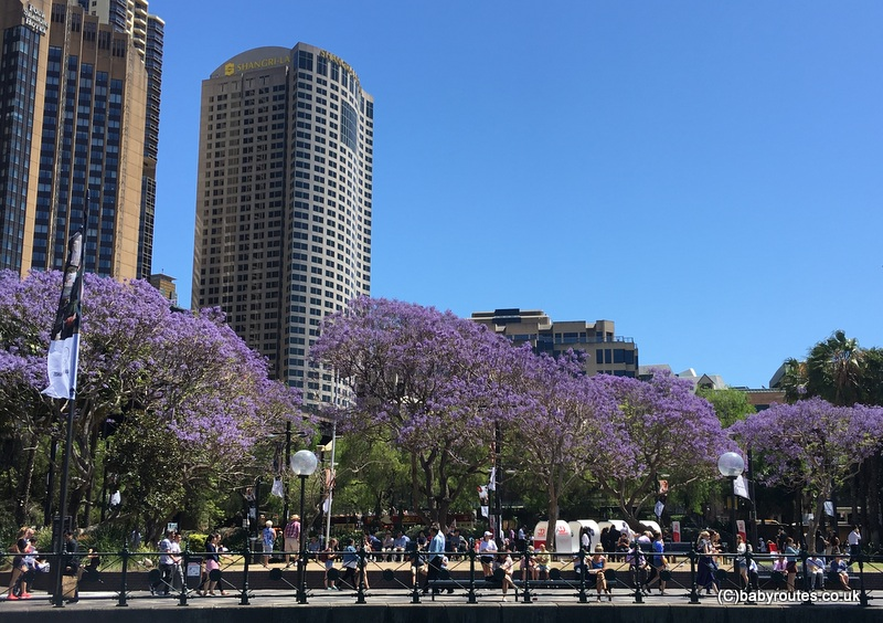 Jacaranda, Circular Quay, A stop-over in Sydney, Australia with kids, Baby Routes