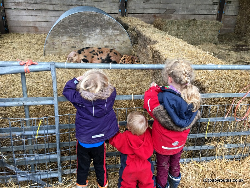 Piglets and mum, Lambing Weekend, Earth Trust